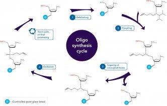art84-cc-oligo-syn-fig2